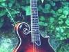 mandolin2